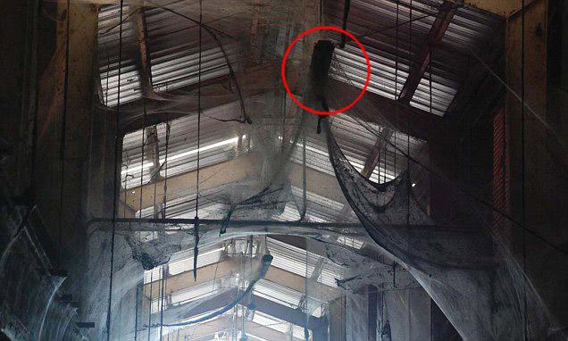 4-acre Spider Web