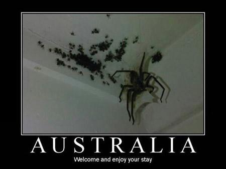 37 folies, vous devrez probablement seulement voir en Australie