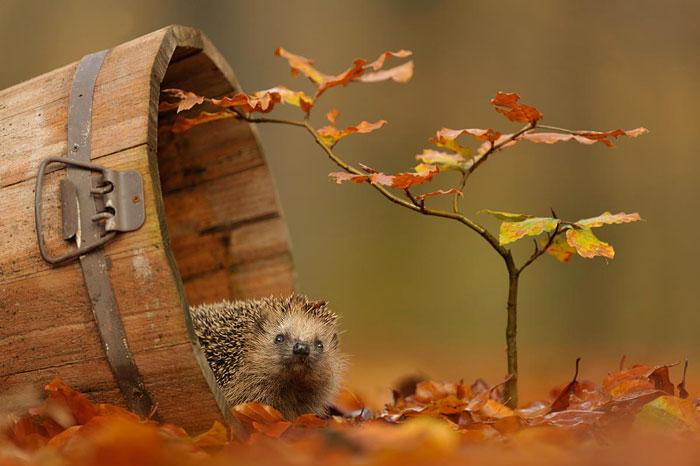Animals in Autumn