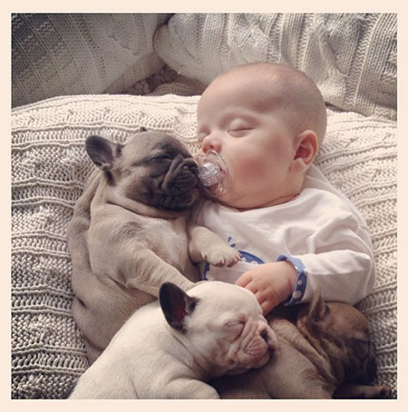 Baby Covered In French Bulldog Puppies Becomes Internet Hit Techeblog