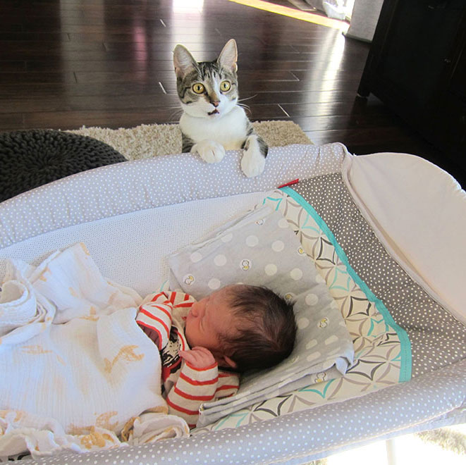 Baby Cat Funny
