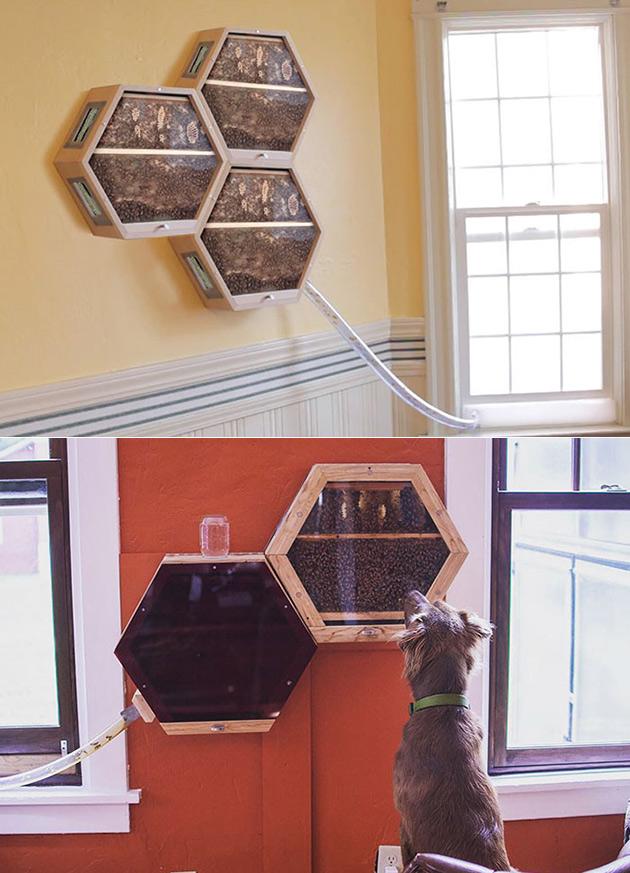 A colheita de Mel em Sua Sala de estar com a Inovadora BEEcosystem