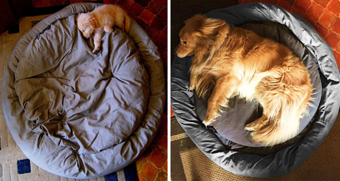 Before After Dog