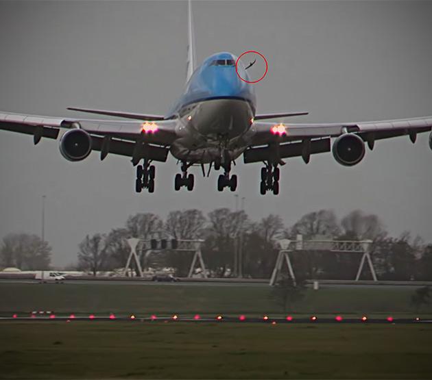 Bird Hits Plane