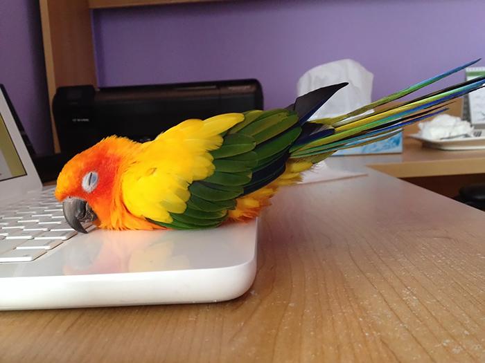 Bird Staying Warm Laptop