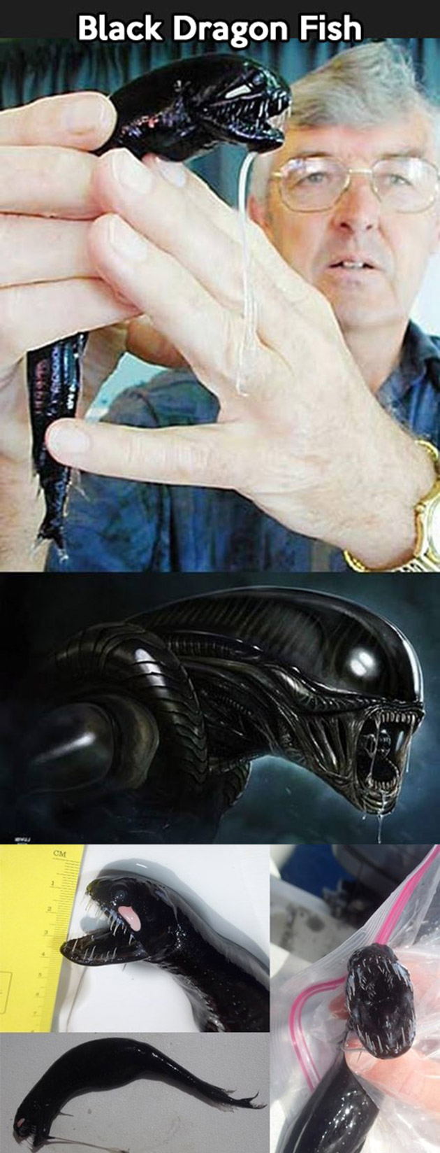 Black Dragonfish Alien