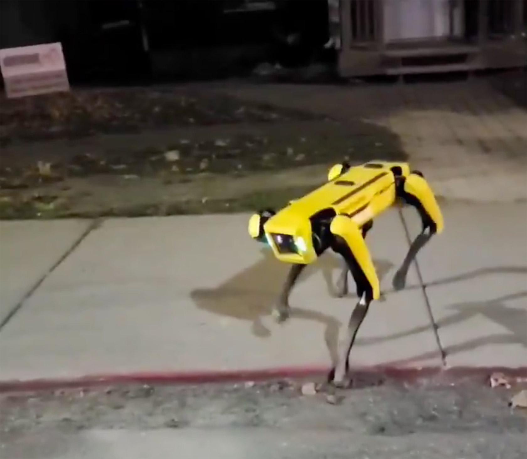 Boston Dynamics Spot Robot Dog Canada Street
