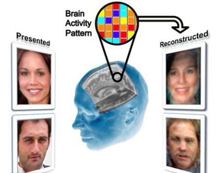 Scientifiques reconstruire fait face en utilisant seulement les scanners du cerveau, est étonnamment précis