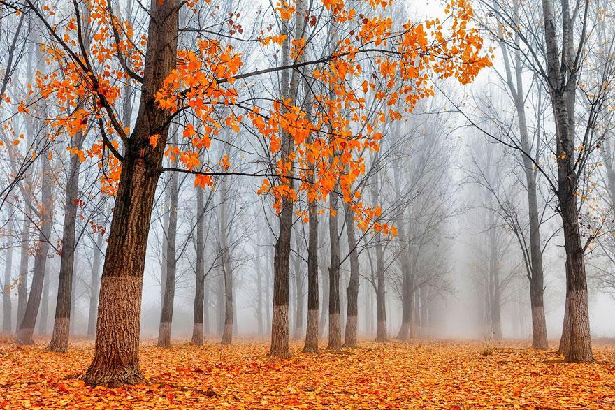 Breathtaking Fall