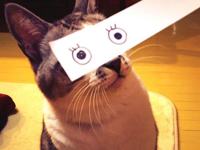 Cartoon Eyes Cats
