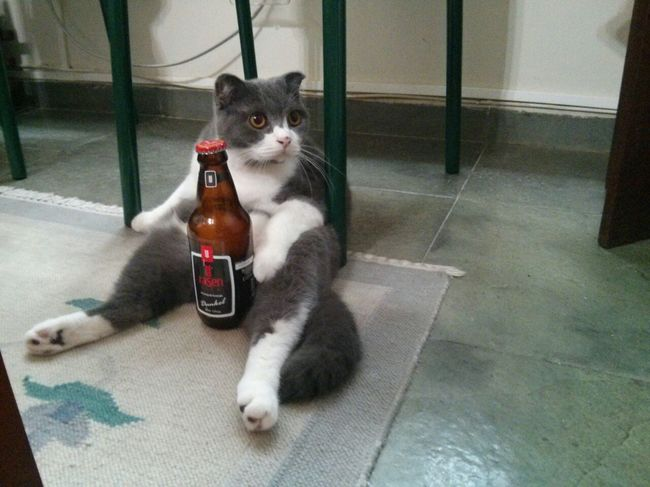 Cat Human Sitting