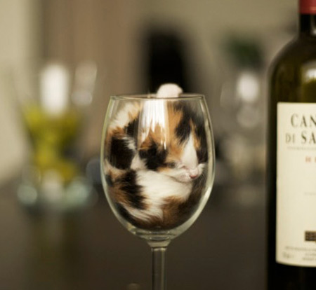 A kitten fitting in a wine glass to illustrate that cats can fit into any small space.