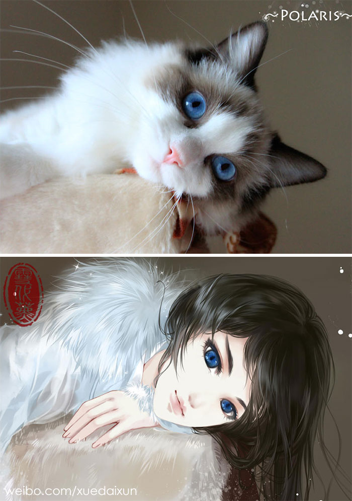 Cats Turned Anime Characters