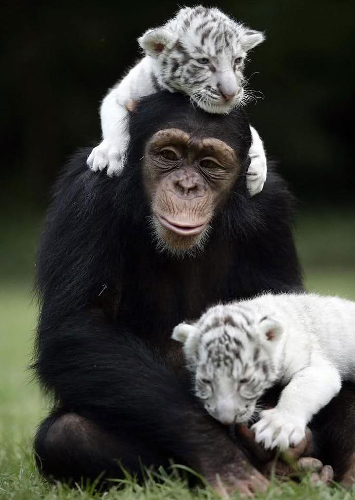Unlikely Animal Friendship