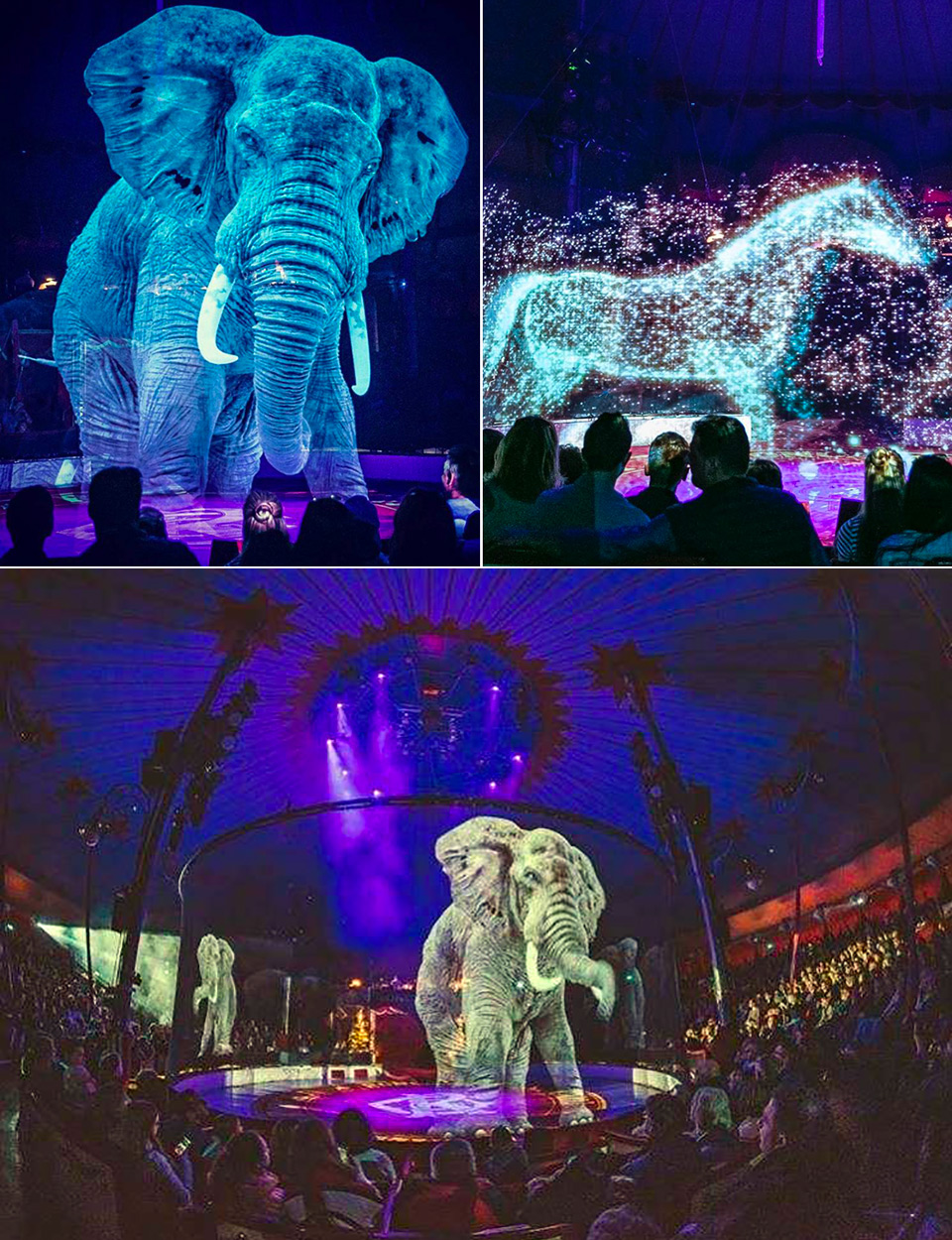 Circus Animals Hologram