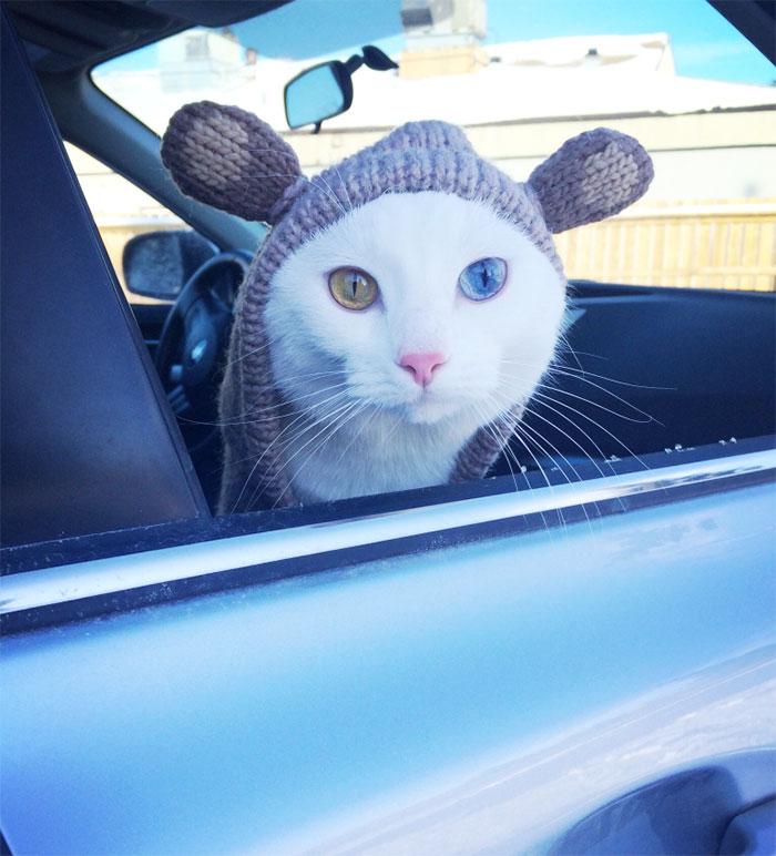 Heterochromatic Eyes Cat