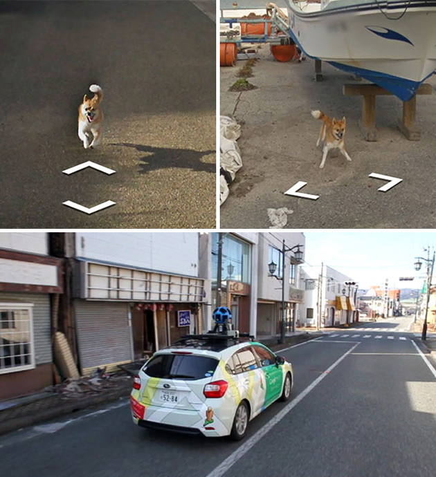Dog Follows Google Street View Car