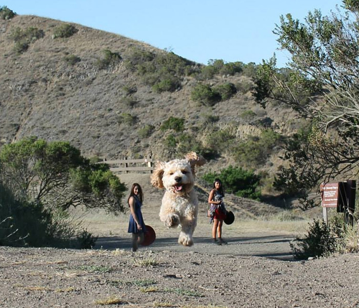 Dogs Giant