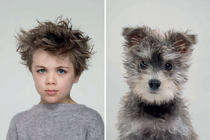 Dogs Look Like Their Owners
