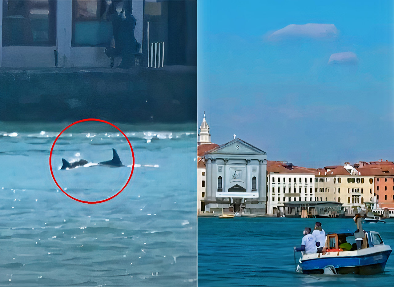 Dolphins Venice Italy Canals