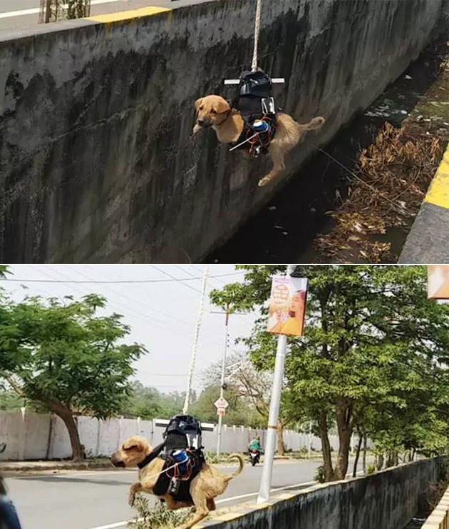 Drone Puppy Rescue