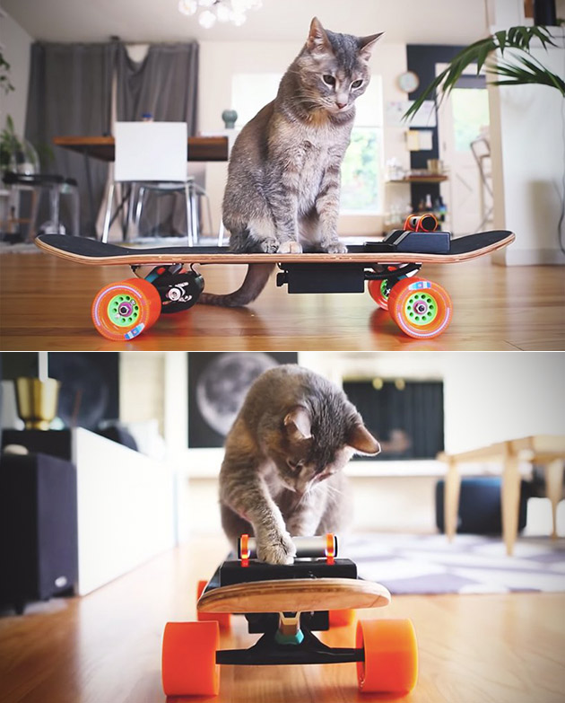 Electric Skateboard Cats
