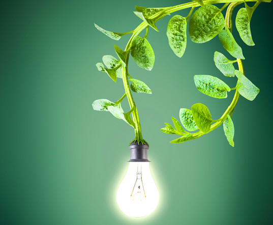 Electricity from Plants