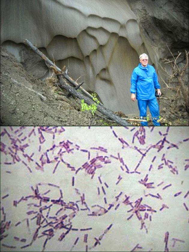 Eternal Life Bacteria