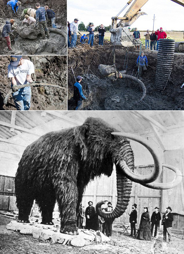 Farmer Woolly Mammoth