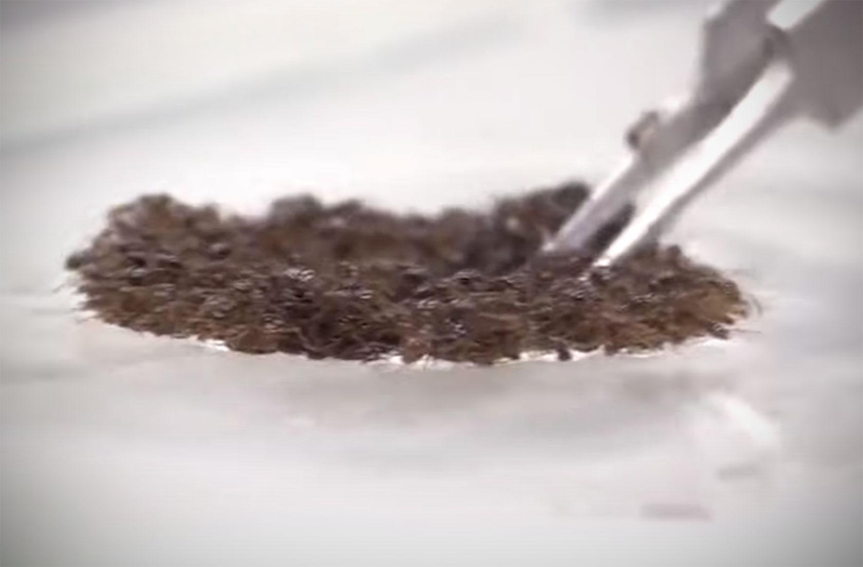 Fire Ants Shape-Shifting Unsinkable Raft