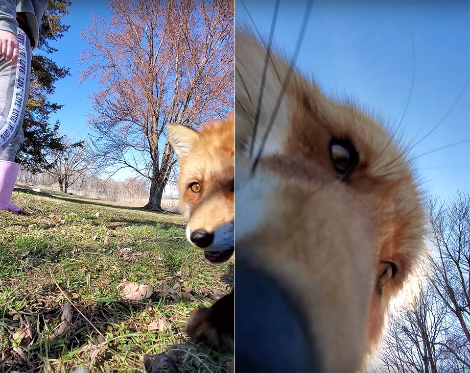 Fox Steals Smartphone