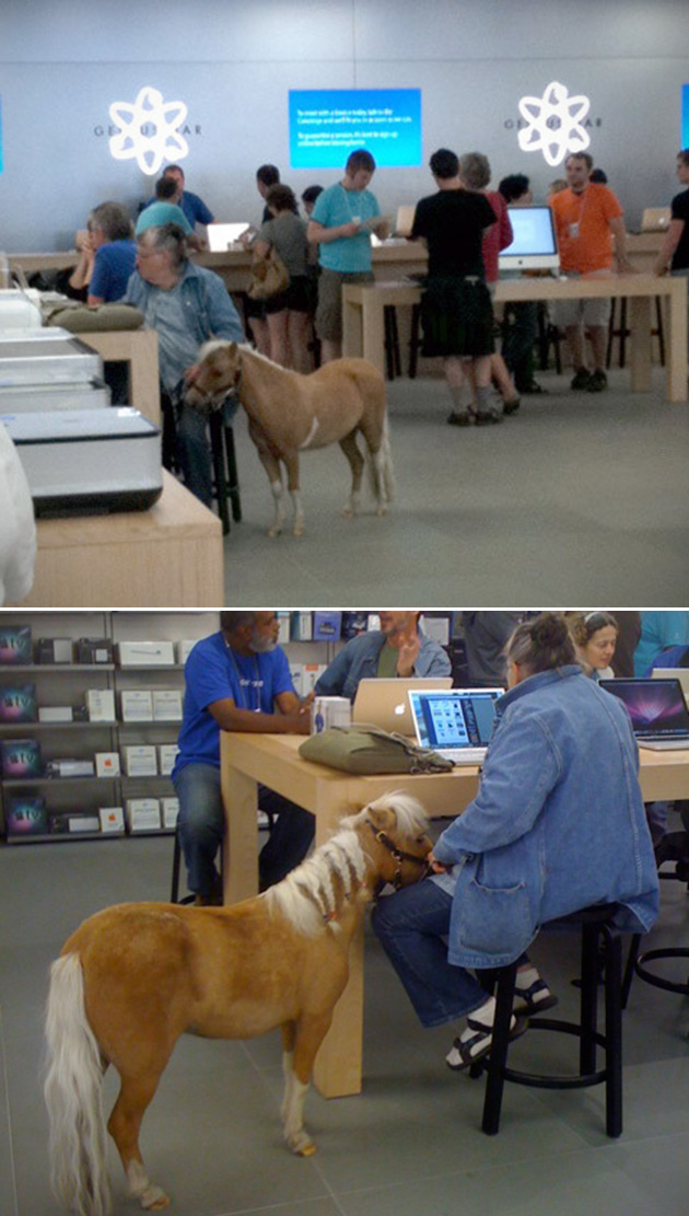Funny Apple Store