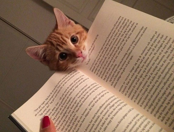 Funny Reading Cat