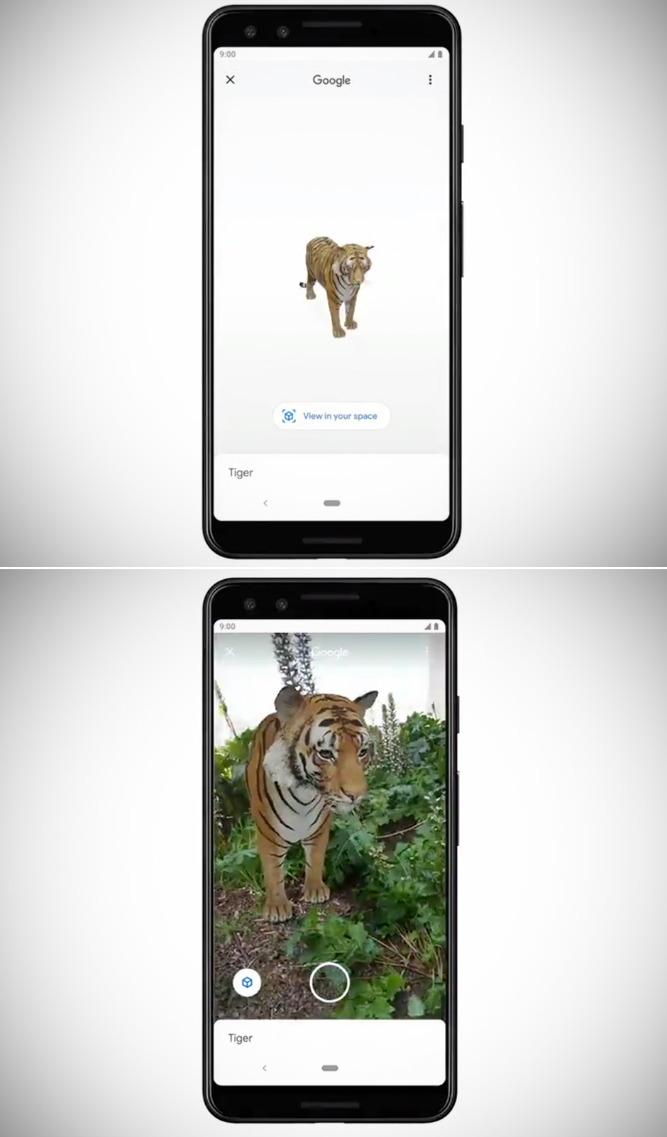 Google Search App Augmented Reality Animals