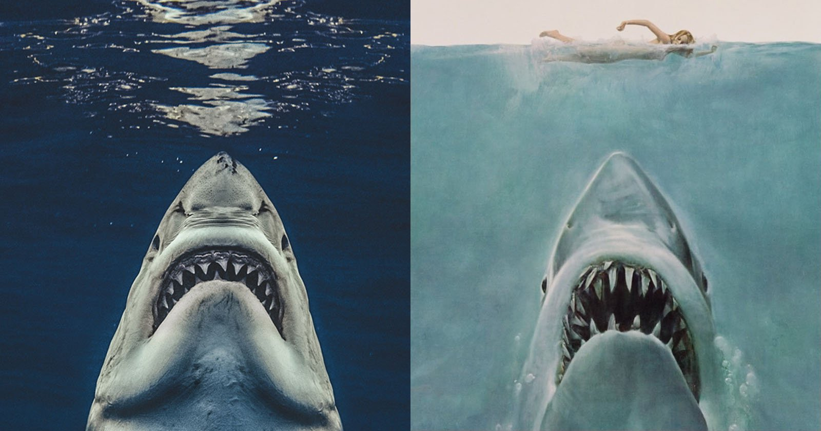 Great White Shark Jaws Movie Poster Recreation Resembles