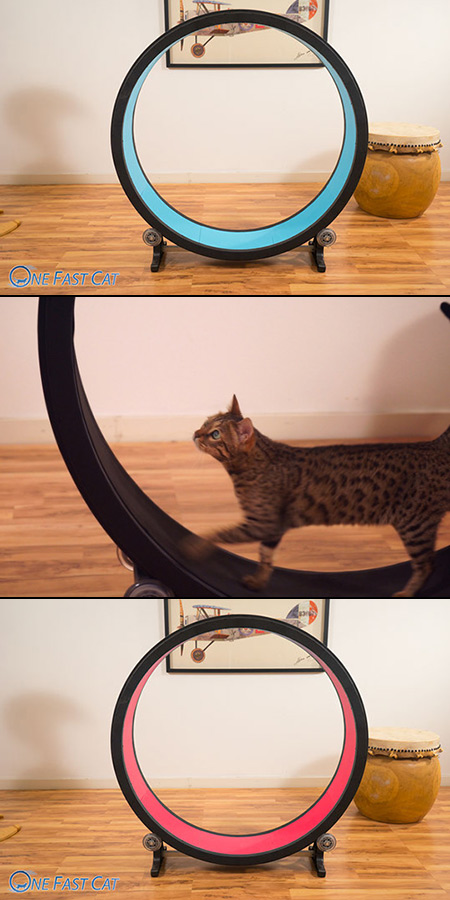 One Fast Cat Unveiled Is A Giant Hamster Wheel For Cats