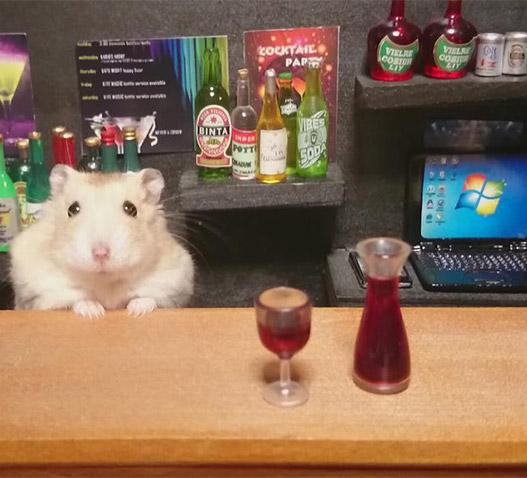 Hamster World