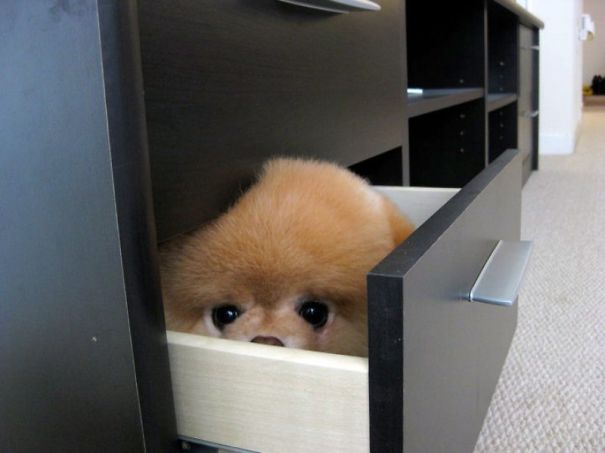 Hide-and-Seek Dog