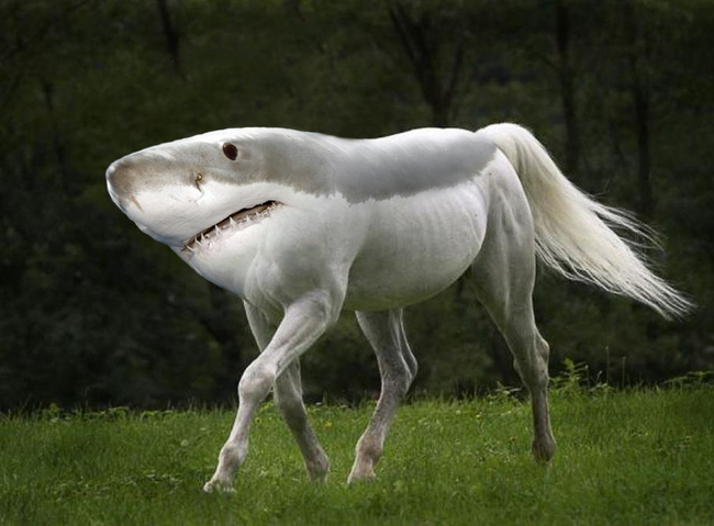 Horse Great White