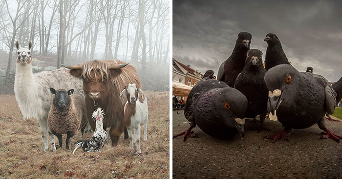Hottest Album Cover Animals
