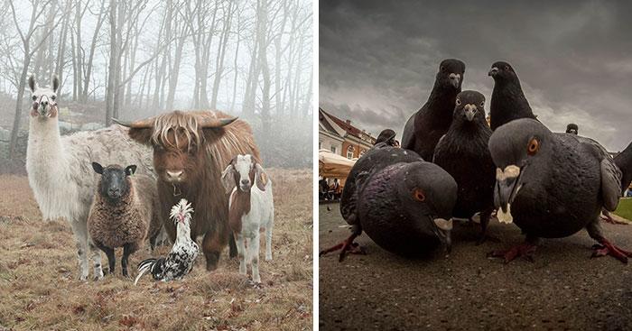 Hottest Album Cover Animals