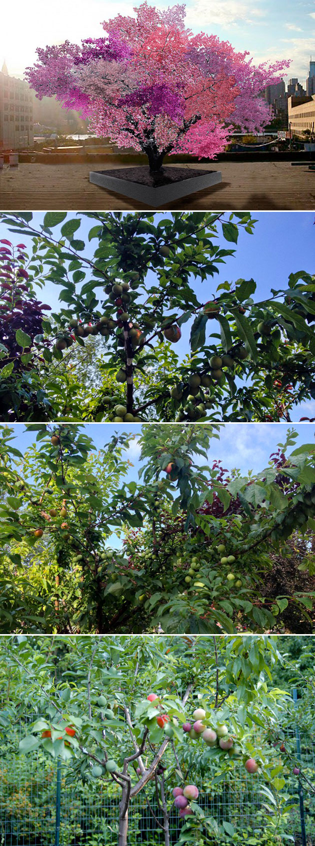 Hybrid Fruit Tree 40 Fruits