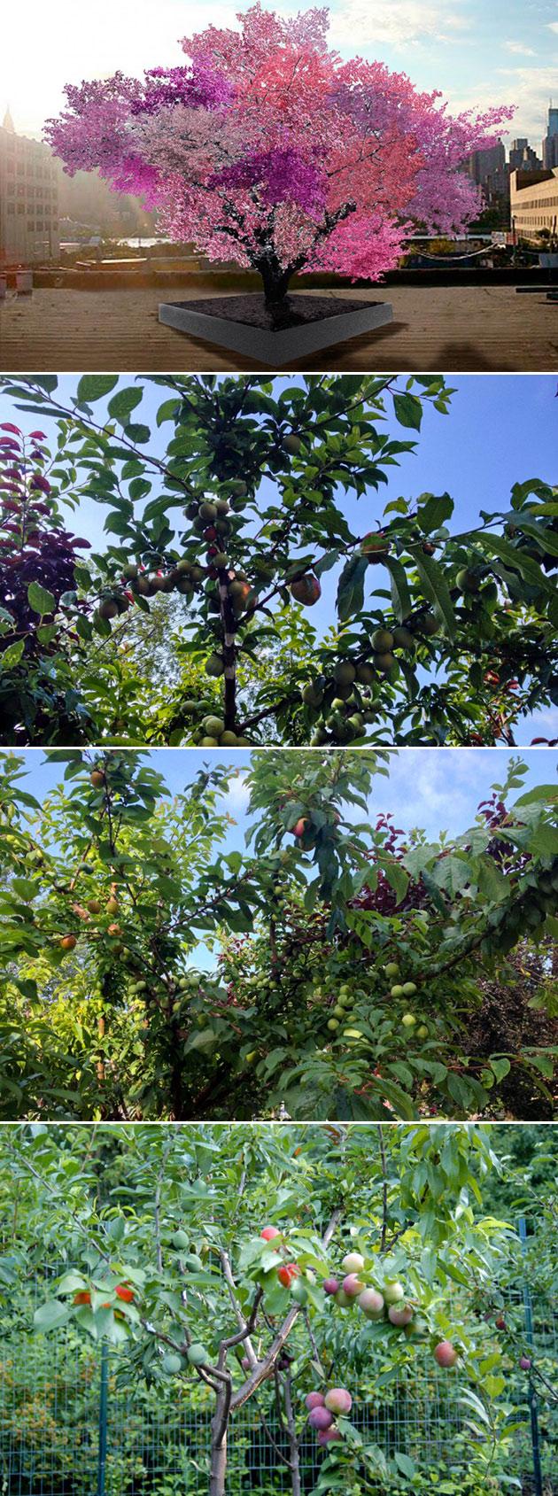 Hybrid Fruit Tree 40 Fruits