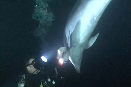 Video Shows Intelligent Dolphin Asking Divers for Help