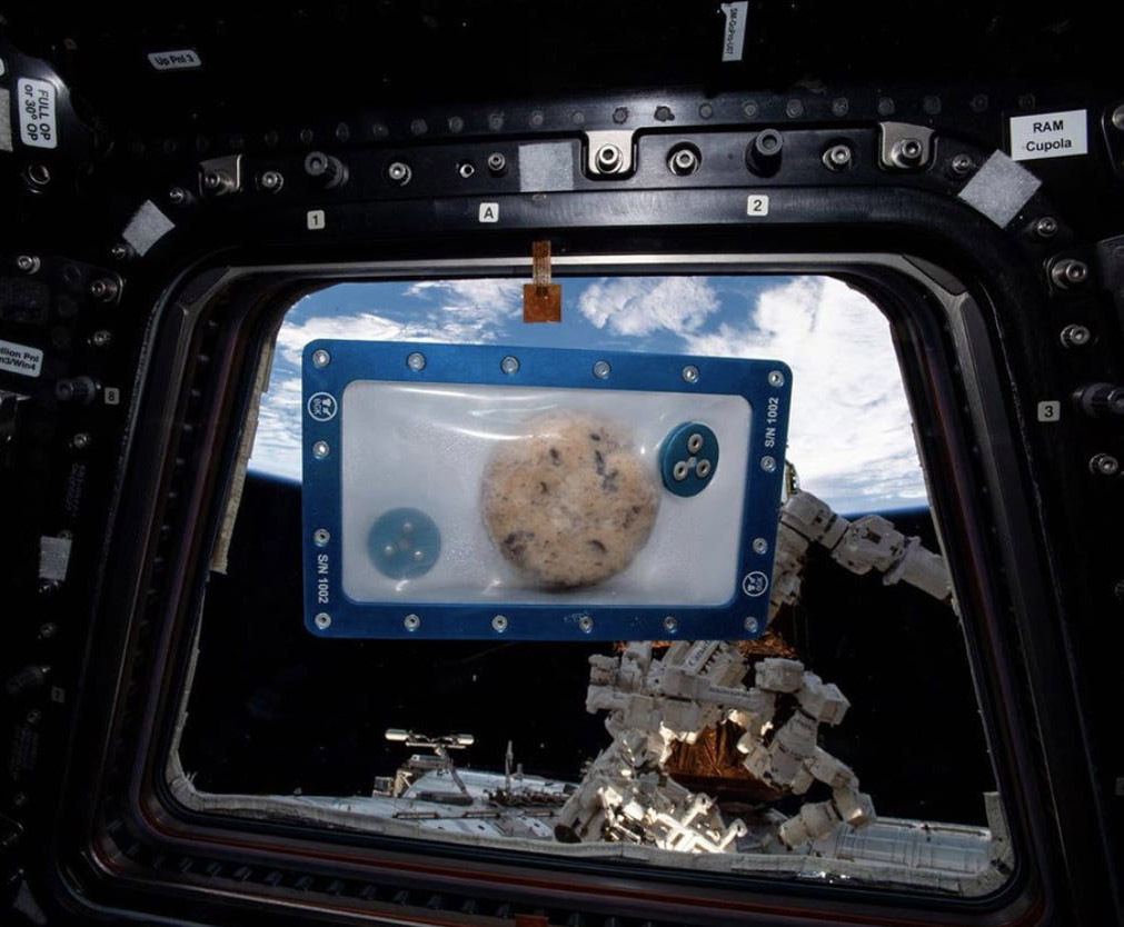 ISS Astronaut Christmas Day Cookies