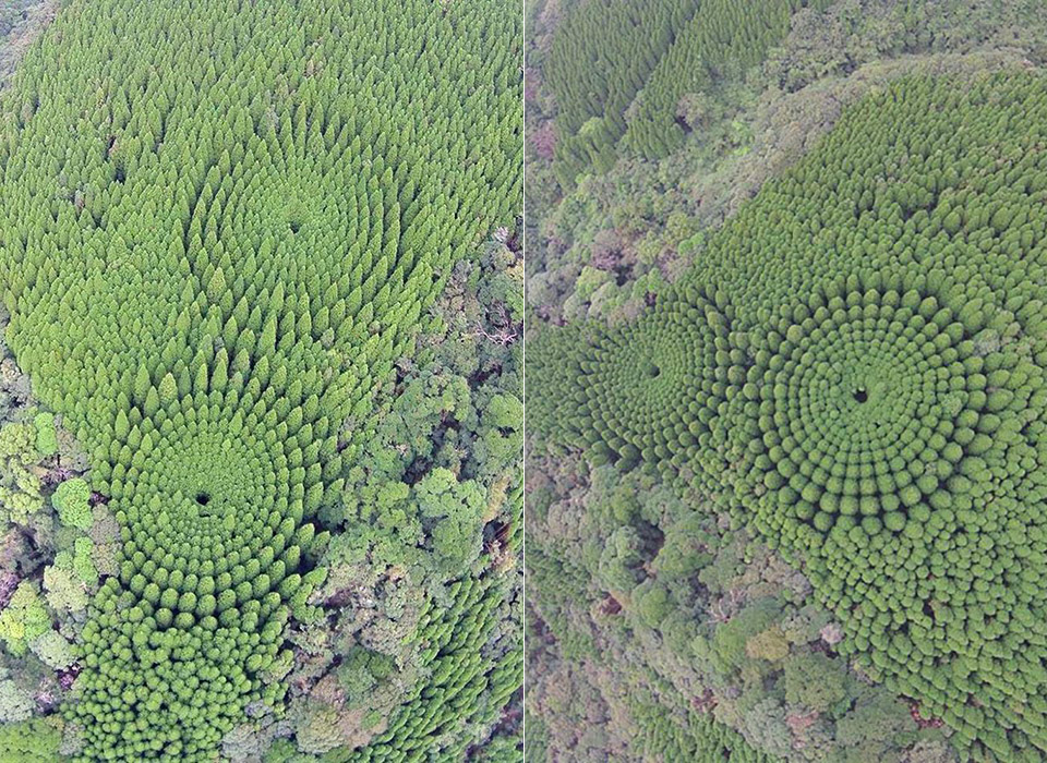 Japan Crop Circle Forest
