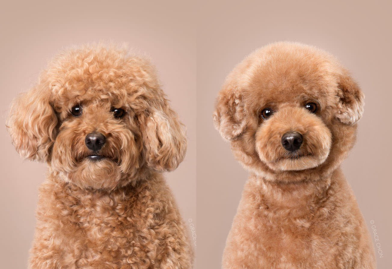 Japanese Photographer Dogs Before After Grooming