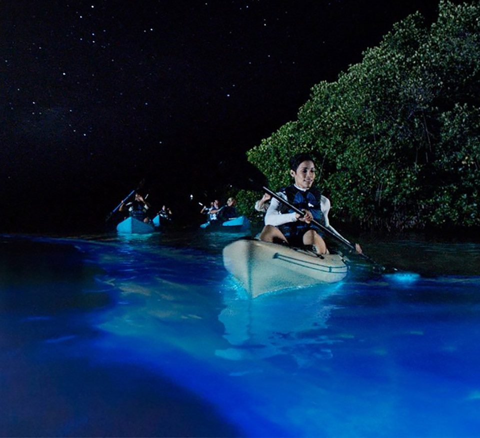 Kayak Bioluminescence Florida
