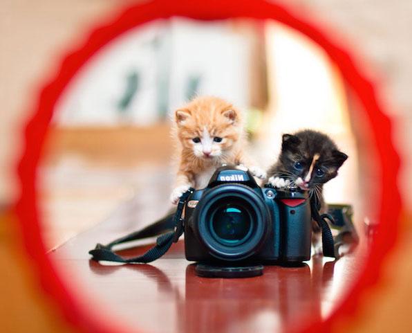 Kittens Using Cameras