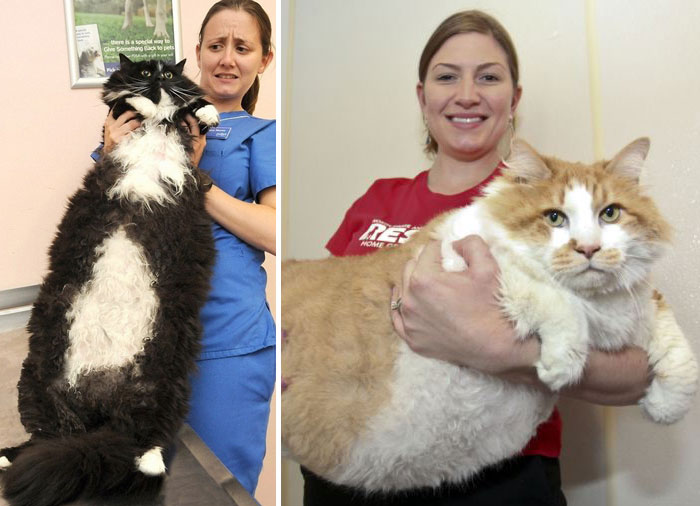 Large Cats